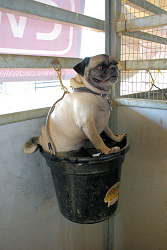 BooBoo in a Bucket (Emily Daily)